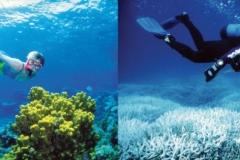 Rafa koralowa Great Barrier w 2002 i 2014 roku
