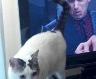 Kot go chyba nie lubi...
