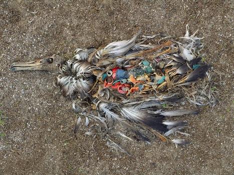 Skutek dzikich wysypisk śmieci